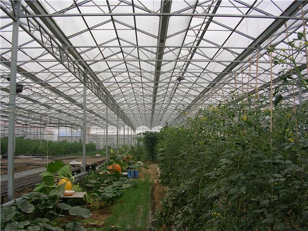 温室大棚的搭建技巧有哪些?